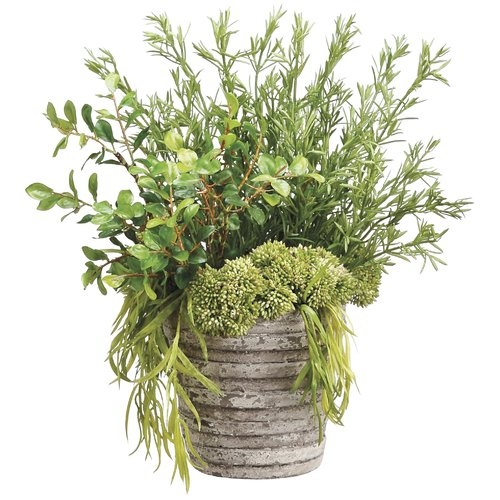 Gracie Oaks Rosemary and Willow Foliage Plant in Pot
