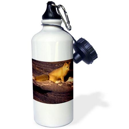 Arctic Fox - 3dRose Arctic Fox, Sports Water Bottle, 21oz