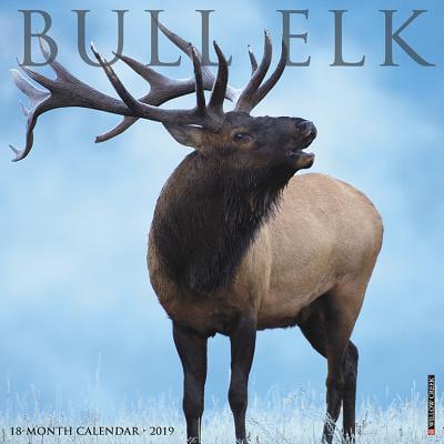 Bull Elk 2019 Calendar