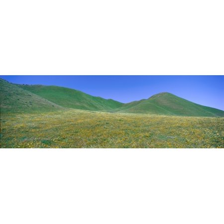 Panoramic View Of Spring Flowers And Green Rolling Hills In Carrizo Plain National Monument San Luis Obispo County California Canvas Art   Panoramic Images  36 X 12