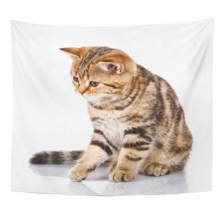 REFRED Adorable Cat Sad Scottish Kitten Sitting on White and Looks Down Tabby Wall Art Hanging Tapestry Home Decor for Living Room Bedroom Dorm 51x60 inch