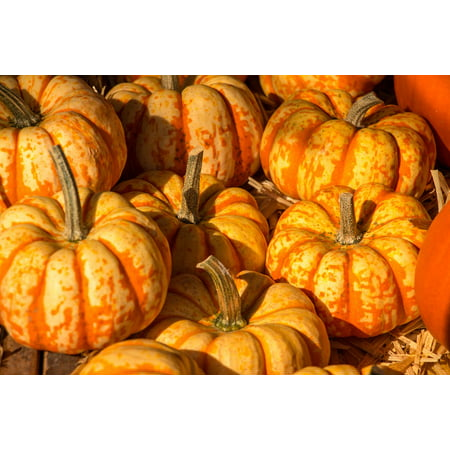 Canvas Print Harvest Festival Autumn Pumpkin Halloween Orange Stretched Canvas 10 x 14