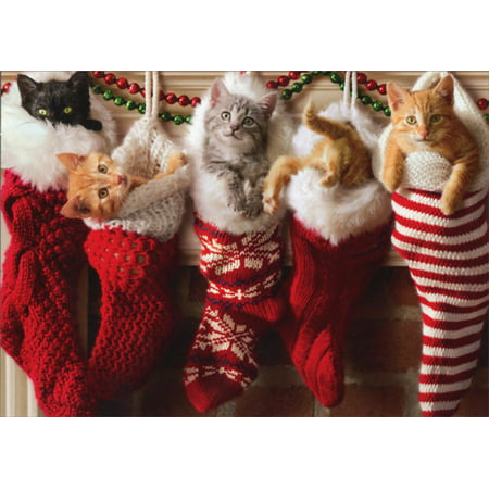 Avanti Press - Avanti Press Kittens In Christmas Stocking Box of 10 Cat Christmas Cards