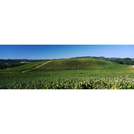 James Berry-Saxum Vineyards at Paso Robles Wine Country California USA Canvas Art - Panoramic Images (36 x 12)