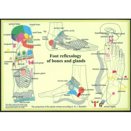 Réflexologie Plantaire de Bones & Glands (Affiche)