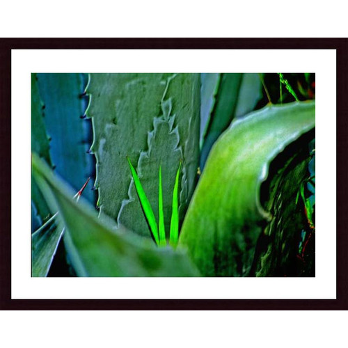 Printfinders 'Grass and Cactus' by John K. Nakata Framed Photographic Print