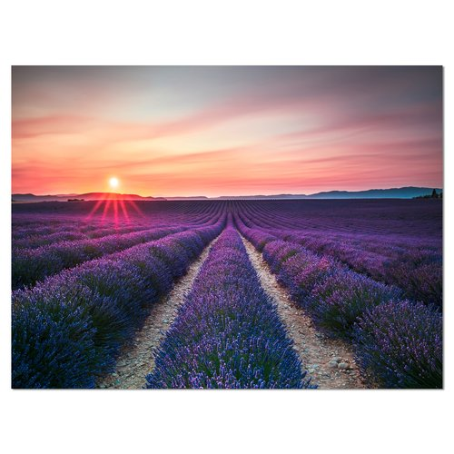 Design Art Endless Rows of Lavender Flowers Modern Landscape Photographic Print on Wrapped Canvas