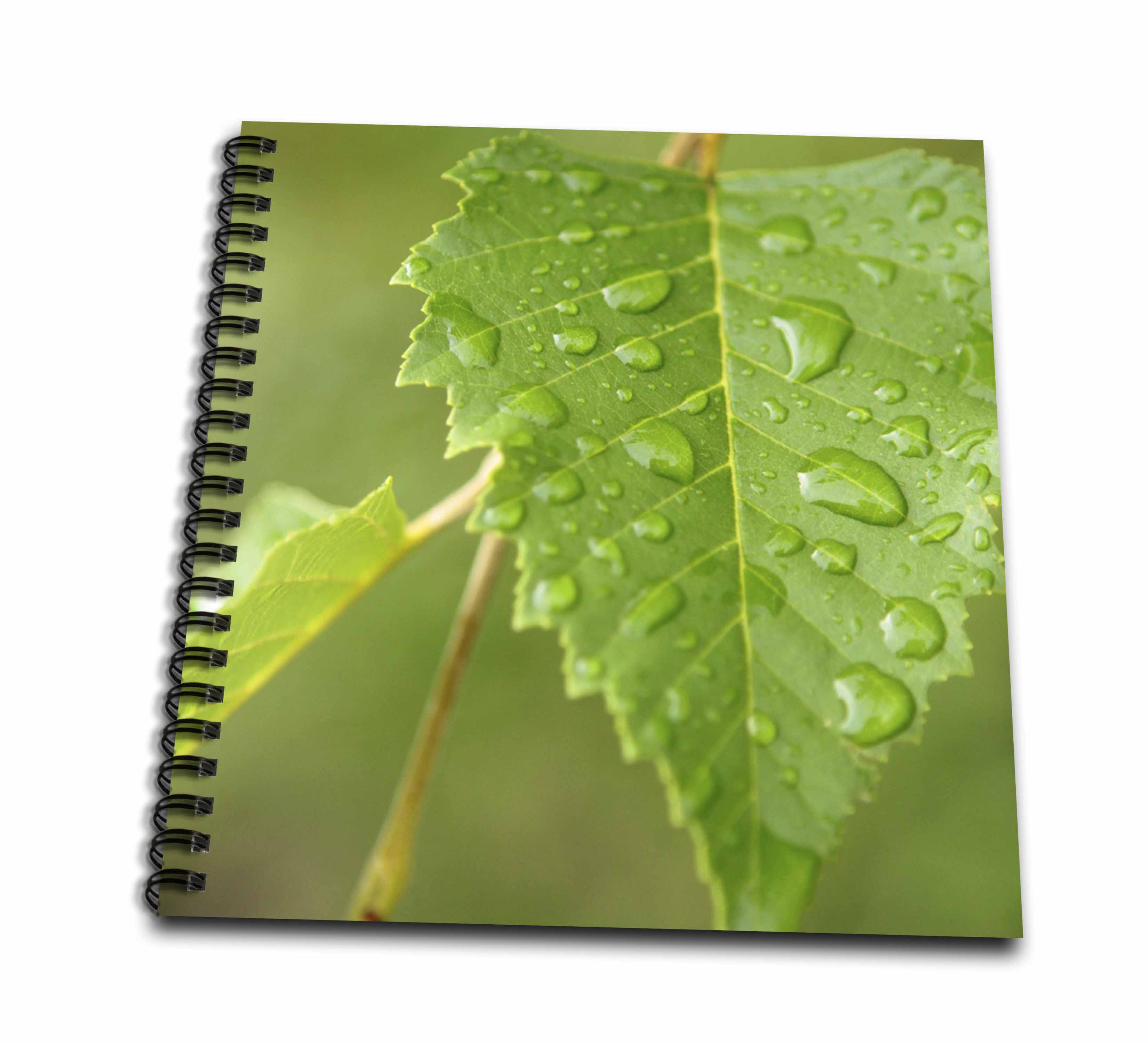 3dRose Plants Leaves Rain Green - Drawing Book, 8 by 8-inch