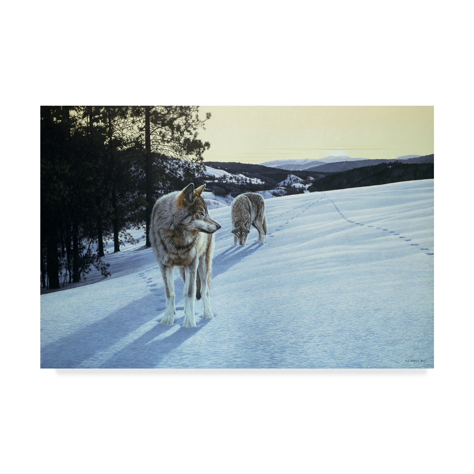 Trademark Fine Art 'At End Of Day Wolves' Canvas Art by Ron Parker