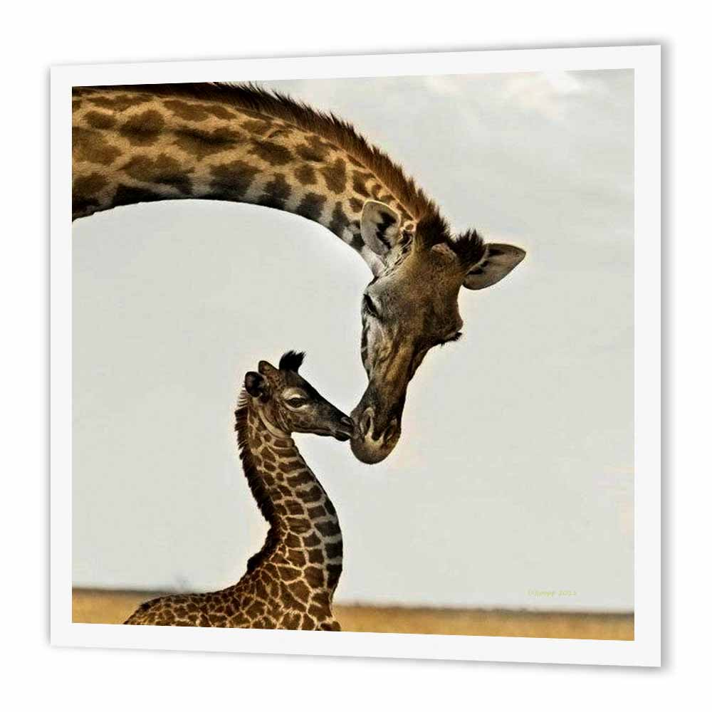 3dRose giraffe mama and baby, Iron On Heat Transfer, 6 by 6-inch, For White Material