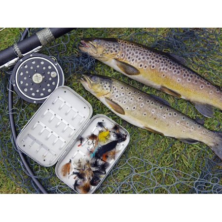 Two Fine Brown Trout Caught with Dapping Fly and Rod from a Boat on Loch Ba Print Wall Art By John
