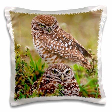 3dRose Burrowing Owl, Cape Coral, Florida - US10 AJE0204 - Adam Jones - Pillow Case, 16 by 16-inch ()