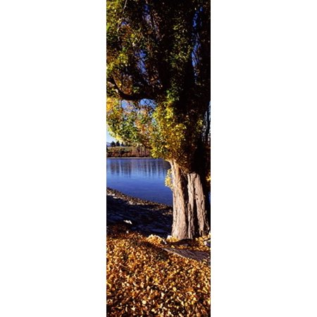 Banks Of Lake Wakatipu Queenstown South Island New Zealand Canvas Art   Panoramic Images  36 X 12