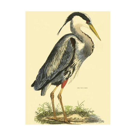 Small Great Blue Heron Print Wall Art By John Selby