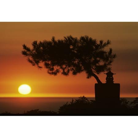 California Big Sur Coast Silhouetted Cypress Tree On Hillside Overlooking Ocean Sunset On Horizon - Bug Silhouette
