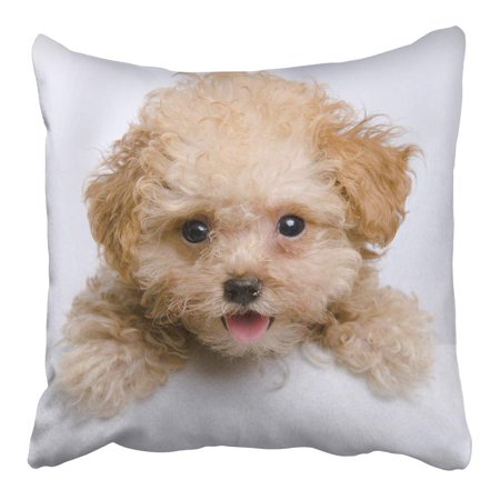 CMFUN Brown Adorable Cute Teddy Bear Toy Teacup Poodle Puppy Looking Over The Bathtub Pillowcase Cushion Cover 16x16 inch