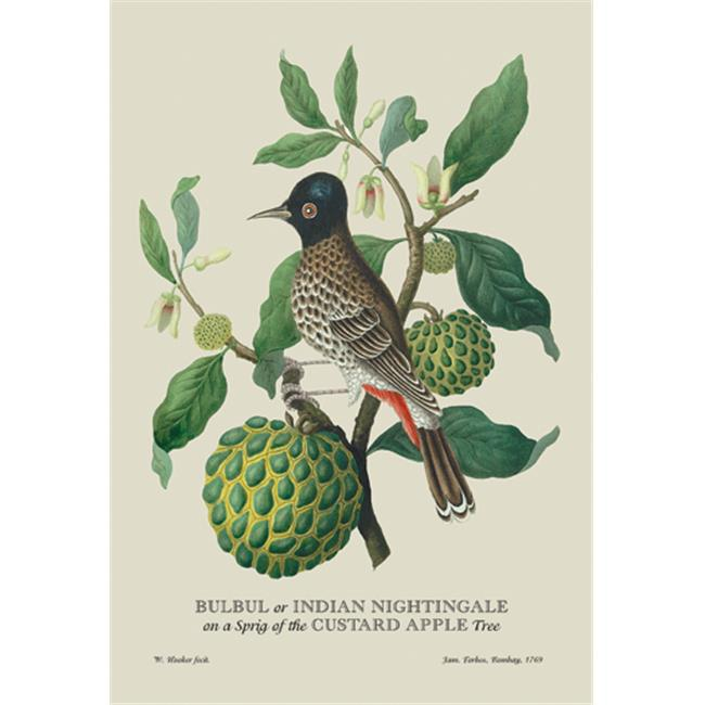 Buy Enlarge 0-587-13534-4P20x30 Bulbul or Indian Nightingale- Paper Size P20x30