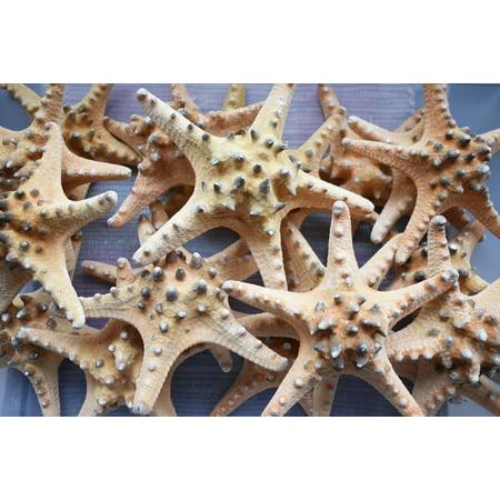 Set of 6 Extra Large Knobby Starfish 7