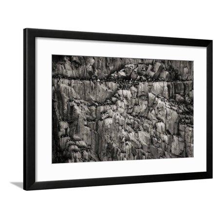 Norway, Svalbard Archipelago. Bird Colony on Cliff Framed Print Wall Art By Bill