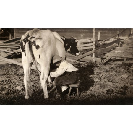 Hine Milking 1913 Nan Eight-Year-Old Boy Milking A Cow On A Dairy Farm In Western Massachusetts Photograph By Lewis Hine August 1913 Poster Print by Granger Collection Western Cow Print
