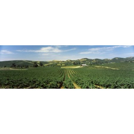 High angle view of a vineyard Carneros District Napa Valley Napa County California USA Canvas Art - Panoramic Images (18 x 6) - Usa Nap