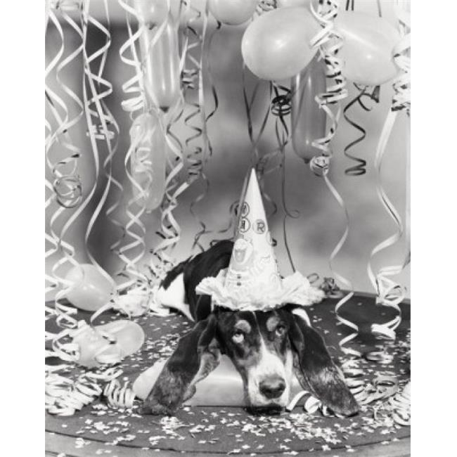 Posterazzi SAL255942 Basset Hound Wearing a Birthday Hat Poster Print - 18 x 24 in. - image 1 de 1