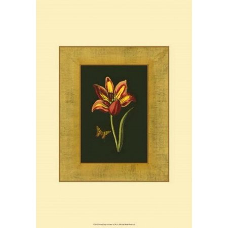tulip in frame i poster print 13 x 19. Black Bedroom Furniture Sets. Home Design Ideas