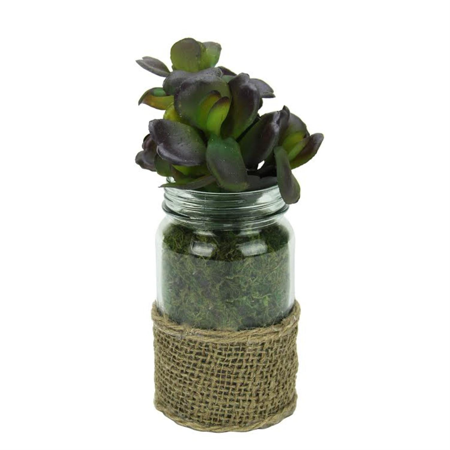 "7.5"" Green and Brown Potted Artificial Jade Succulent Plant in Glass Jar with Burlap Grip"