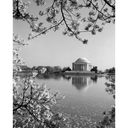 Traditional Jefferson Cherry (USA Washington DC The Jefferson Memorial framed by cherry blossoms across the tidal basin in spring Stretched Canvas -  (24 x 36) )