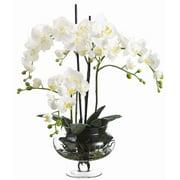"25"" Cream Phalaenopsis in Glass Jar"