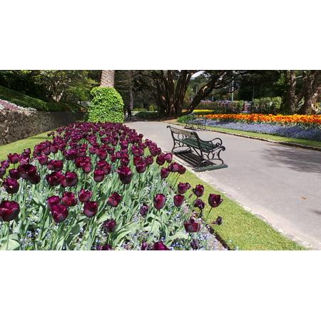 LAMINATED POSTER Wellington Park New Zealand Nz Tulips Poster Print 24 x 36 (Halloween Wellington Nz)