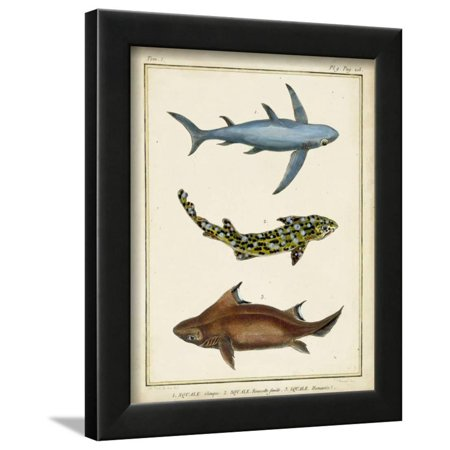 Antique Rays and Fish III Framed Print Wall Art By (Antique Fish)