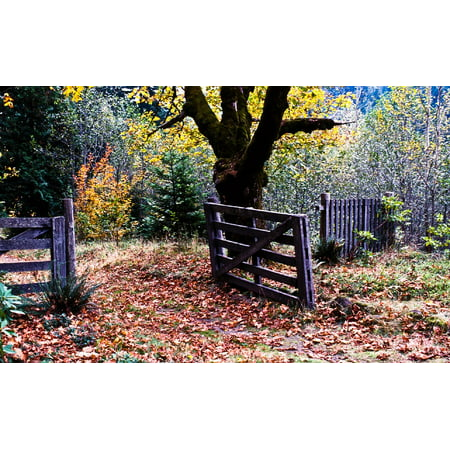 Framed Art for Your Wall Autumn Gate Fence Leaves Fall Nature Weathered 10x13 Frame