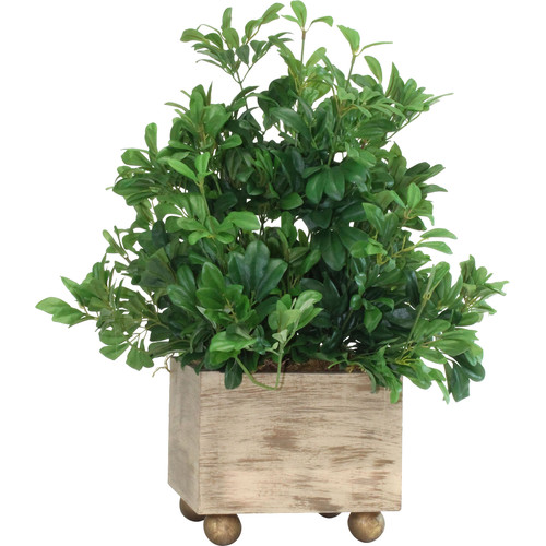 Dalmarko Designs Boxwood Antiqued Desk Top Plant in Planter