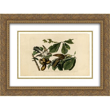 John James Audubon 2x Matted 24x20 Gold Ornate Framed Art Print 'Plate 2. Yellow-billed Cuckoo' 1932 Gold Framed Print