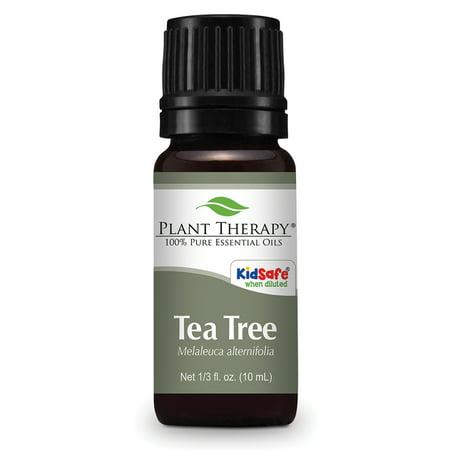 Plant Therapy Tea Tree Melaleuca Essential Oil 10 Ml  1 3 Fl  Oz   100  Pure  Undiluted  Therapeutic Grade