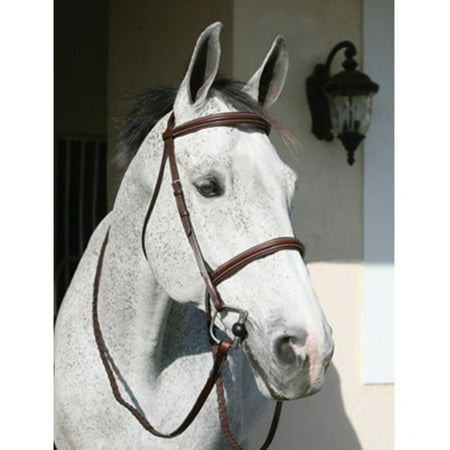 (Henri De Rivel Pro Plain Raised Padded Bridle with Head Piece and Matching Reins)