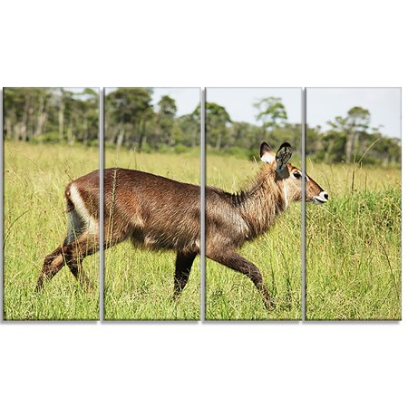 Waterbuck Antelope in Green Grass - Extra Large African Canvas Art Print - image 2 de 3
