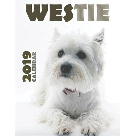Westie 2019 Calendar (Paperback)
