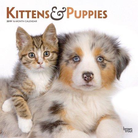 2019 Kittens & Puppies Wall Calendar, by