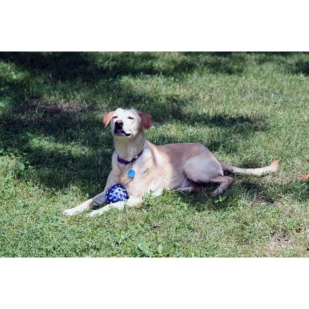 LAMINATED POSTER Rescue Retriever Terrier Ball Dog Labrador Golden Poster Print 24 x 36