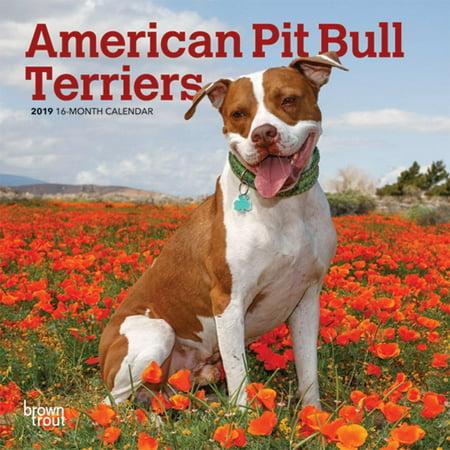 2019 American Pit Bull Terriers Mini Wall Calendar,  by (America 2008 Calendar)