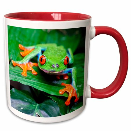 3dRose Red eyed Tree Frog, Agalychnis callidryas, Costa Rica - Two Tone Red Mug, 11-ounce