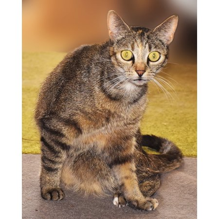 - LAMINATED POSTER Eyes Cat Domestic Cat Adidas Animal Yellow Eyes Poster 24x16 Adhesive Decal