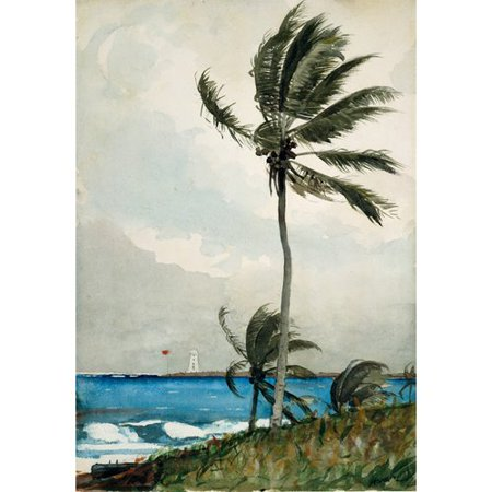 Frames By Mail Palm Tree  Nasau Gallery By Winslow Homer Print Of Painting On Wrapped Canvas