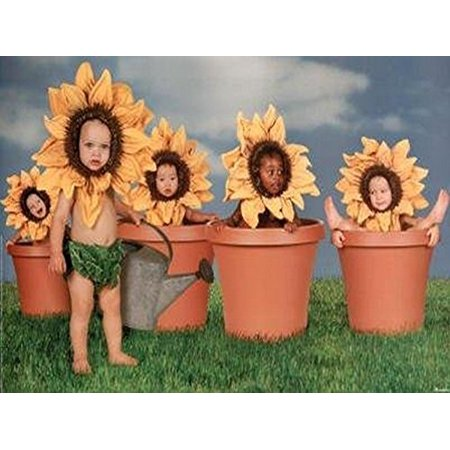 - 5 Sunflower Kids in Flower Pots Photograph 36.5x24.5 Art Print Poster Super Babies Baby Cute Funny Yellow