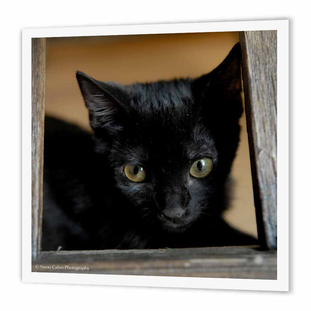 3dRose Black Kitten in a frame, Iron On Heat Transfer, 8 by 8-inch, For White Material