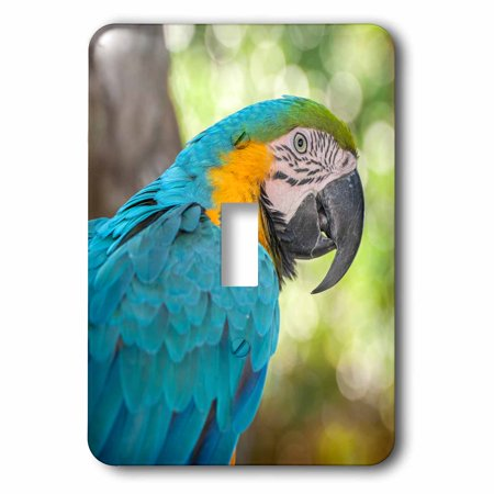 3dRose USA, Florida, Orlando, Blue-and-Yellow Macaw, Gatorland., 2 Plug Outlet Cover