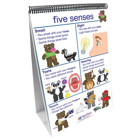 FLIP CHARTS ALL ABOUT ME EARLY CHILDHOOD SCIENCE