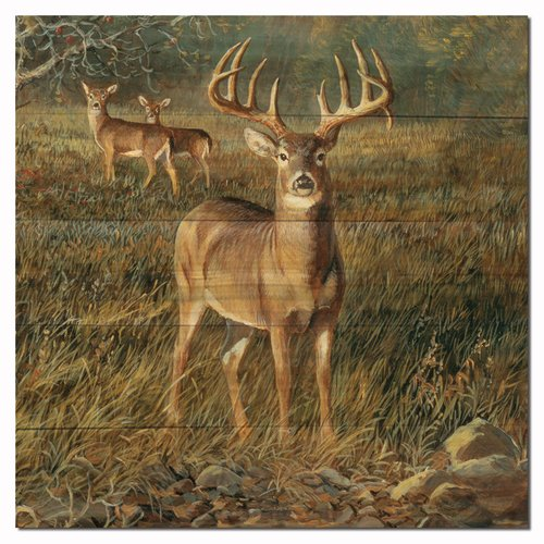 WGI-GALLERY First Light Buck by Persis Clayton Weirs Painting Print Plaque by WGI-GALLERY